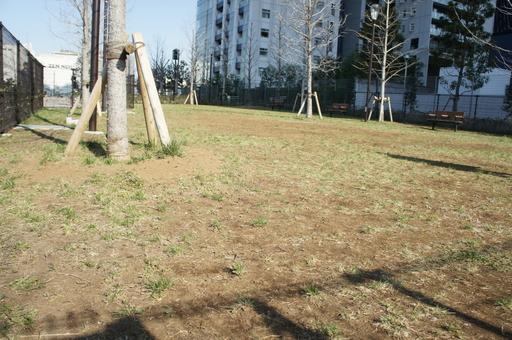 残念な感じの芝生