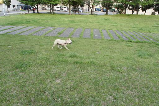 ビルの前に広がる芝生の広場